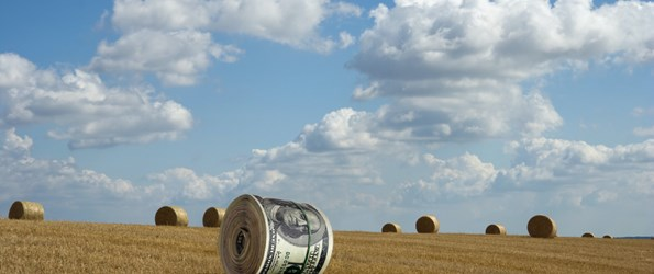 dollar crop valuation intangible capital