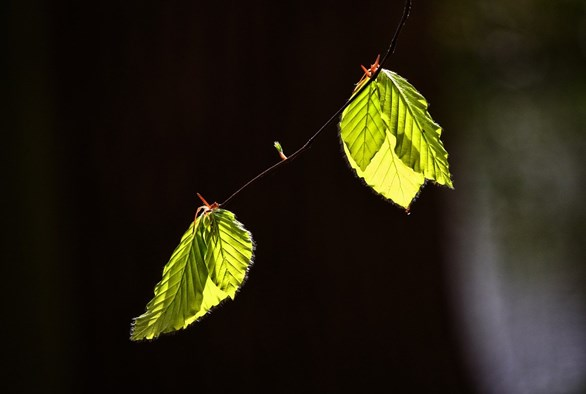 Turning Over a New Leaf: Life After Selling Your Business